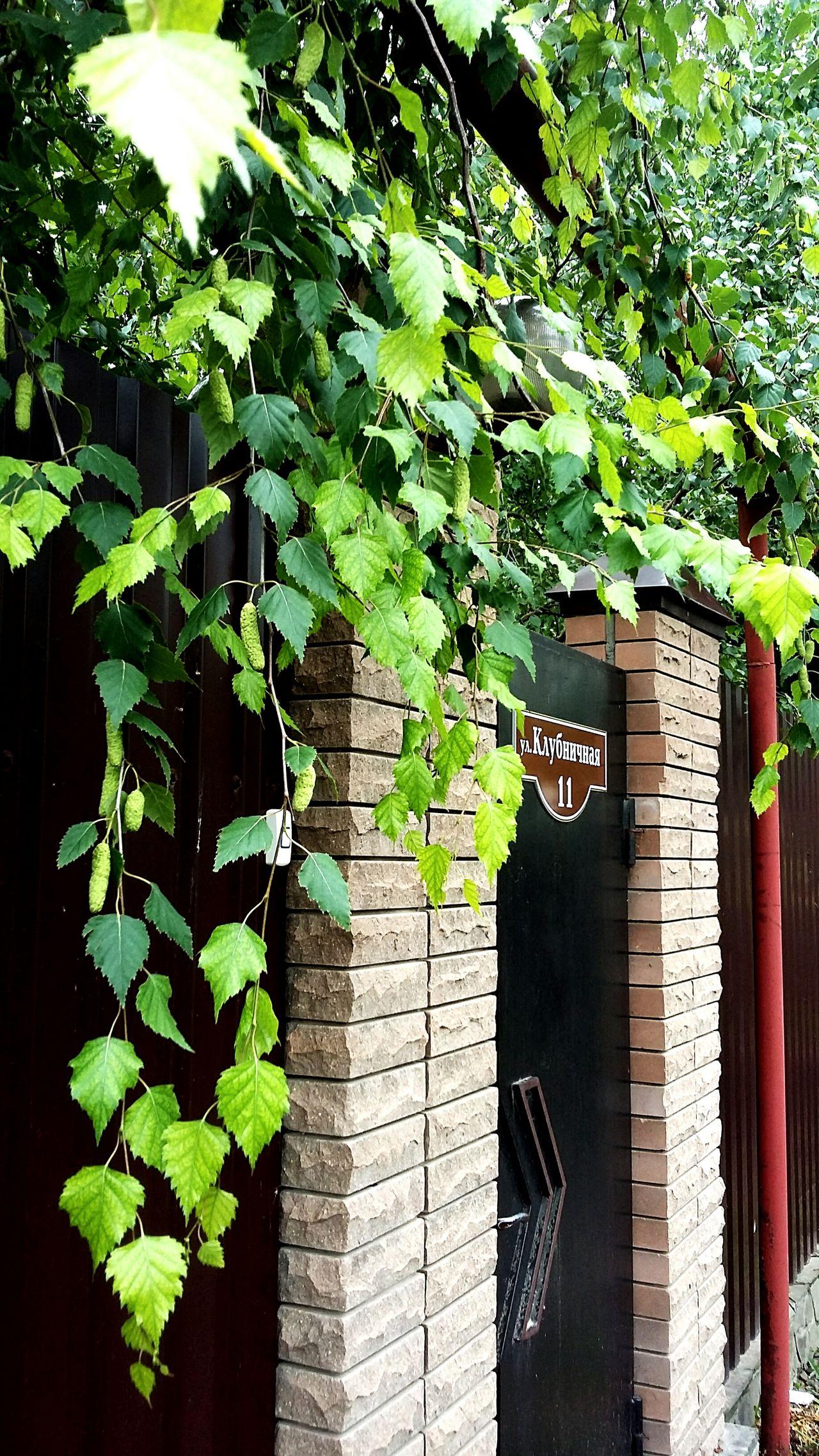 Russia Rostov-on-Don Lubushkino No People Green Color Beauty In Nature Day Nature Green Color Tree Beresa