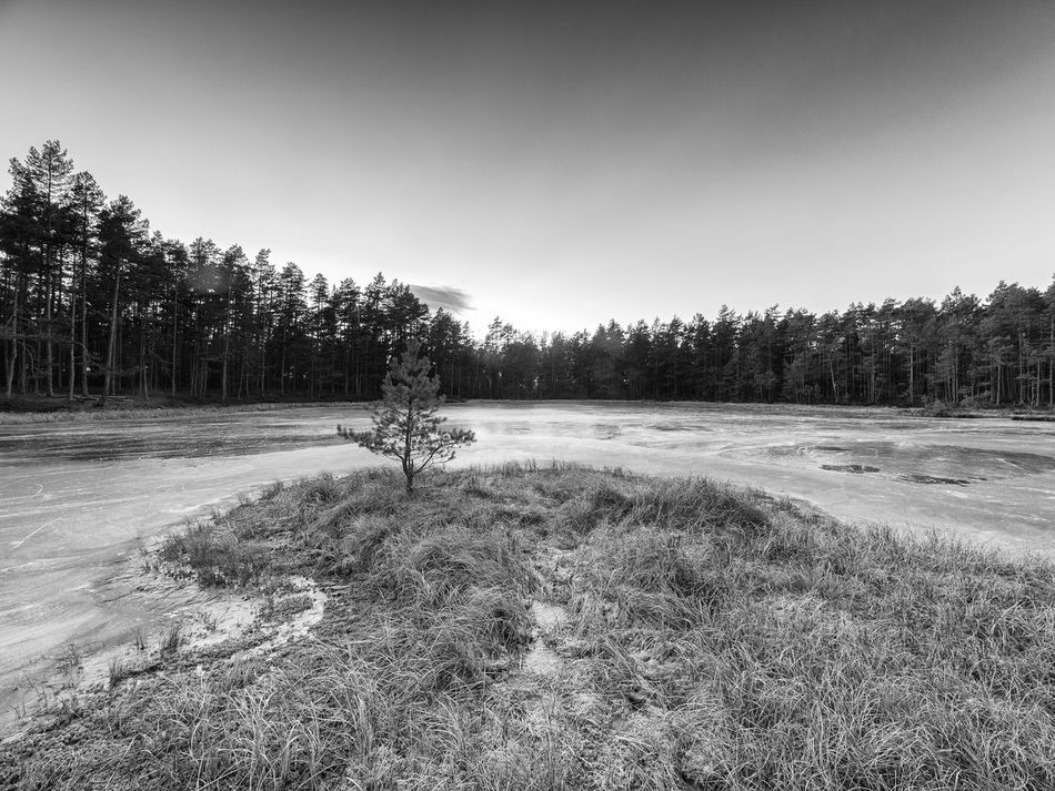 The frosen lake Måsatjernet at Nesodden, Norway Black & White Blackandwhite Forest Forrest Lake Frosen Lake Frost Frosty Days Frozen Lake View Lakeshore Nature Nature No People Norway Outdoors Scandinavia Small Tree Small Tree On The Beach Tree Wood