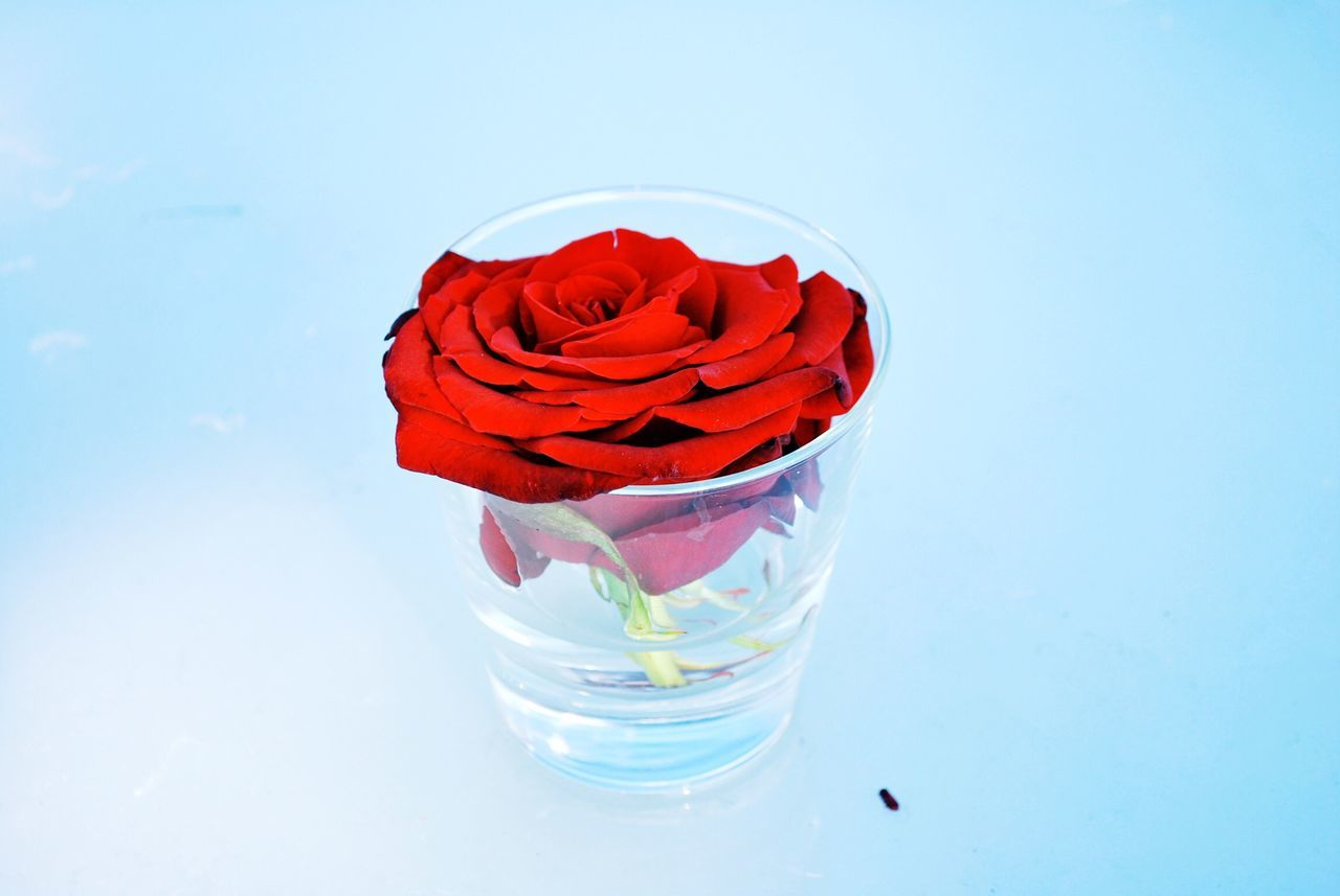 Beautiful stock photos of valentinstag,  Blue,  Drinking Glass,  Flower,  Flower Head