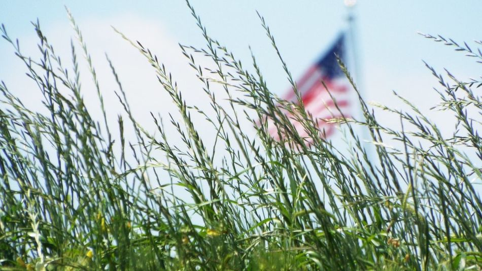 Beautiful stock photos of memorial day, American Flag, Close-Up, Day, Flag