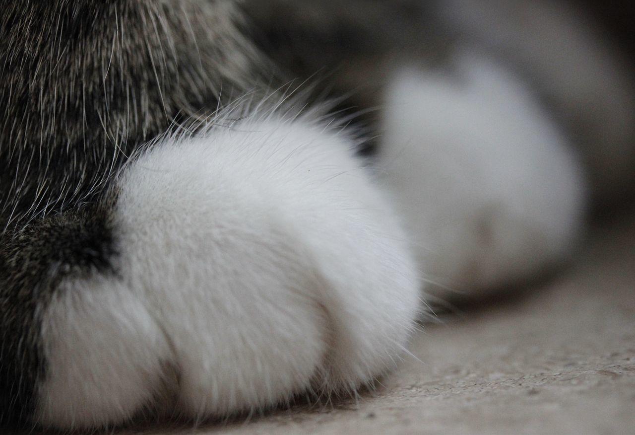 My cat Pets Cats Pet Cat Paws Macro Photography