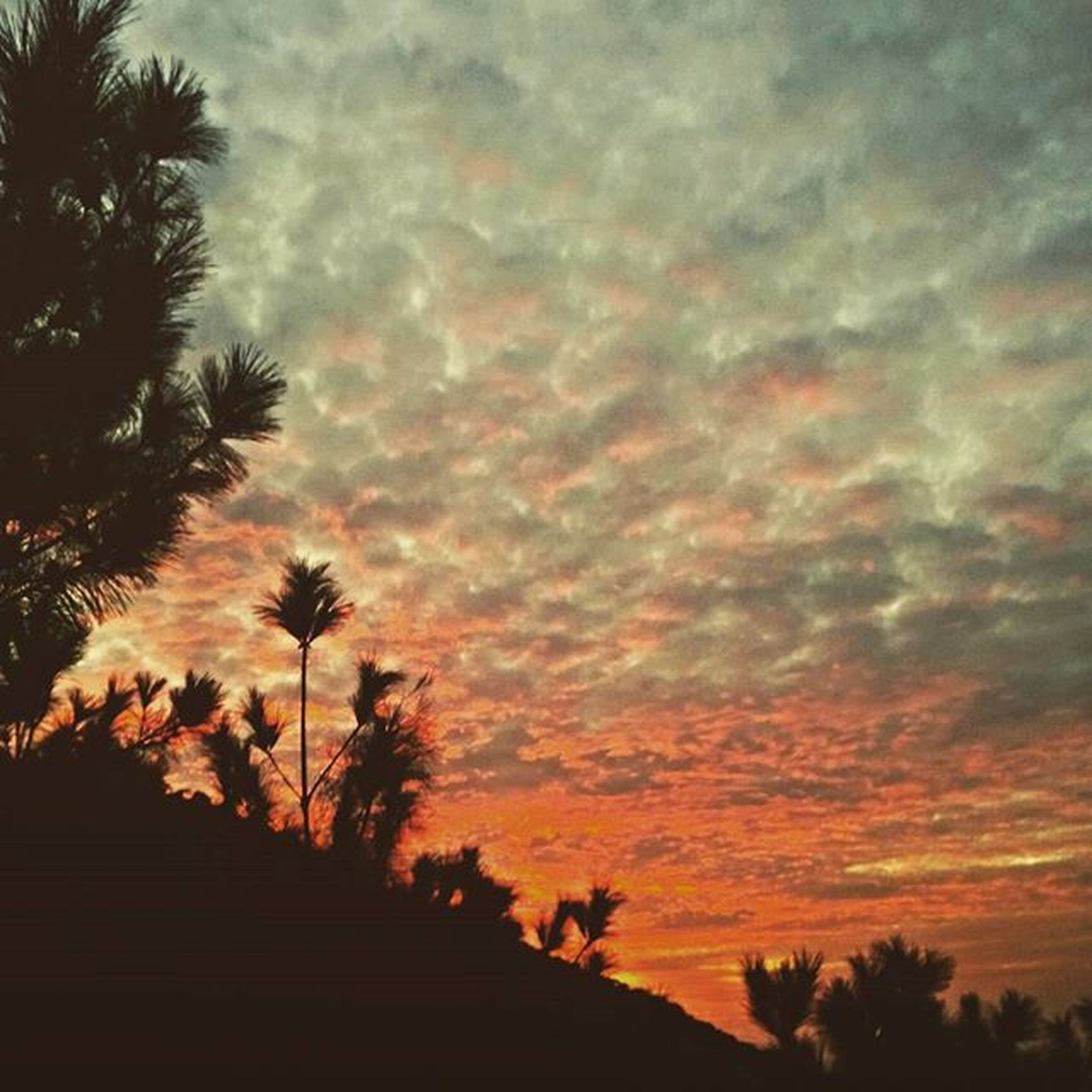 sunset, silhouette, sky, palm tree, beauty in nature, tree, cloud - sky, tranquility, scenics, tranquil scene, orange color, nature, dramatic sky, low angle view, cloudy, cloud, idyllic, growth, outdoors, no people