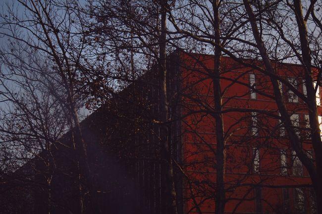 Architecture Ljubljana Urban Buildings TreesInTheCity