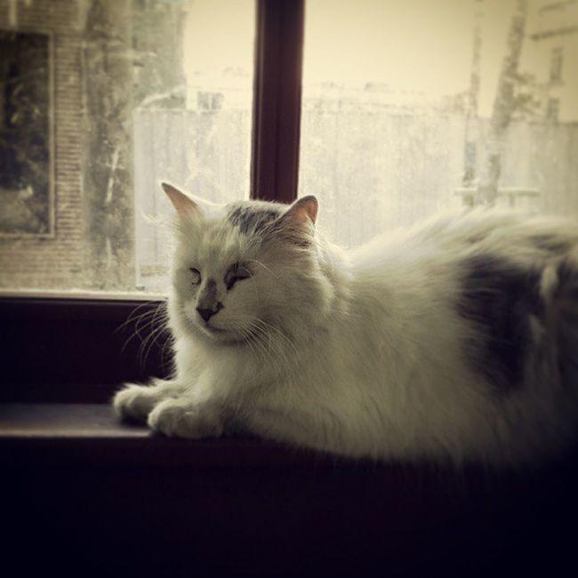 Pencere miskini. Cat Kedi Pencere Window Pictures Pictur Instaday Instagram Caturday Sokakkedisi Sokakhayvanlari