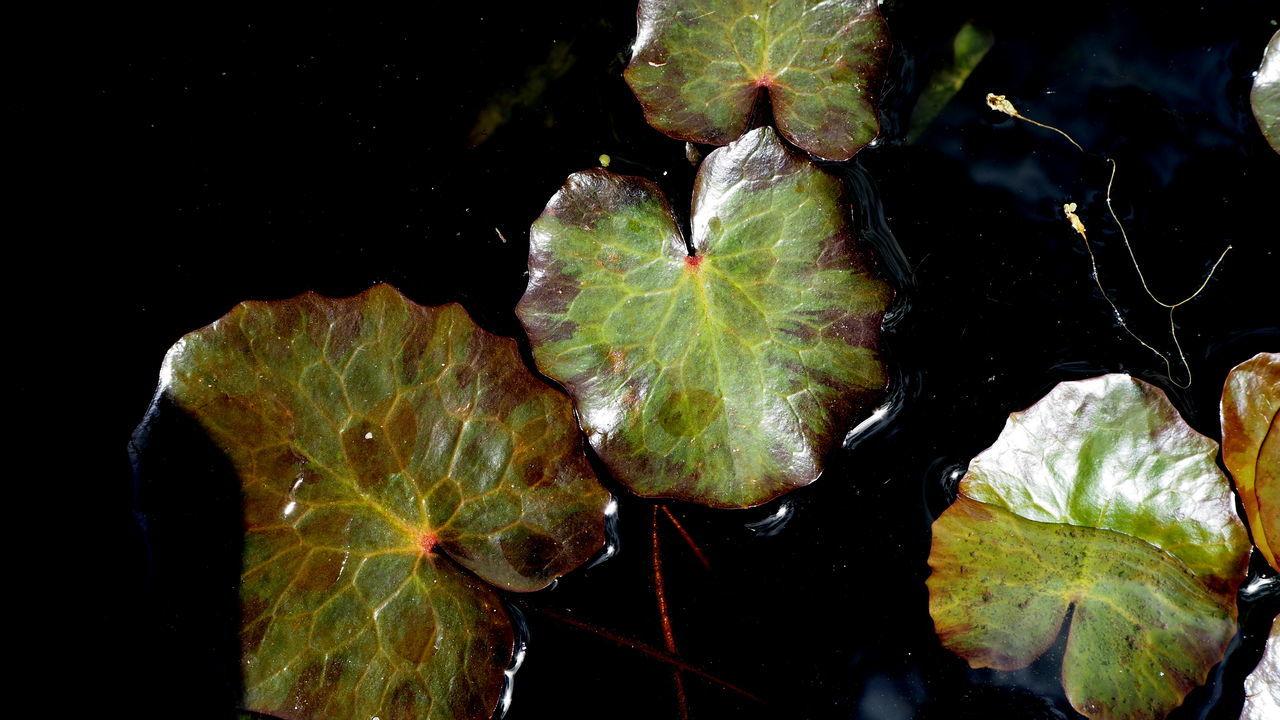 Garden Green Color Nature Nenuphar No Filter Plant Selective Focus Water