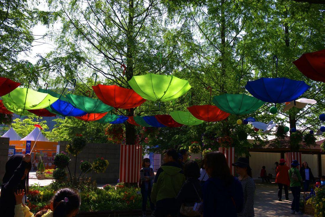 Flowers Umbrellas Trees