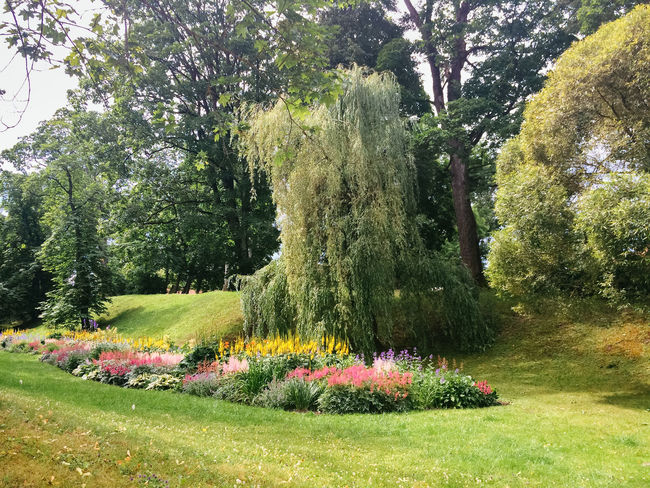 Pils Parks, Kuldiga. Latvia Beauty In Nature Change Day Forest Grass Green Green Color Growth Kuldiga Latvia Lush Foliage Narrow Nature No People Outdoors Park Plant Relaxing Moments Summer Summertime The Way Forward Tranquility Tree