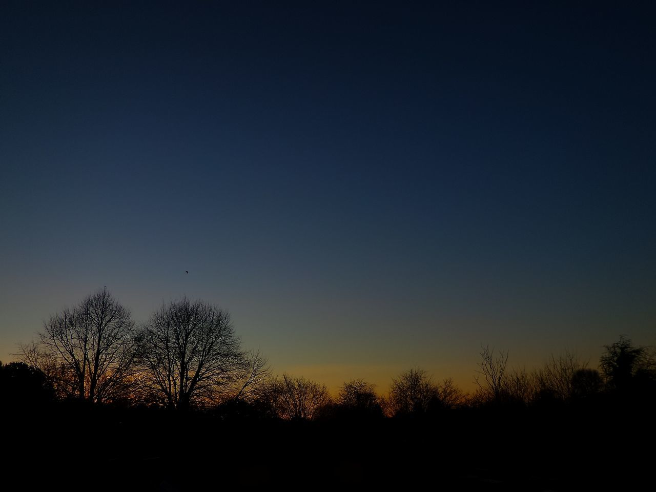 silhouette, bare tree, beauty in nature, nature, tree, scenics, tranquil scene, blue, tranquility, clear sky, sunset, sky, outdoors, no people, landscape, moon, day