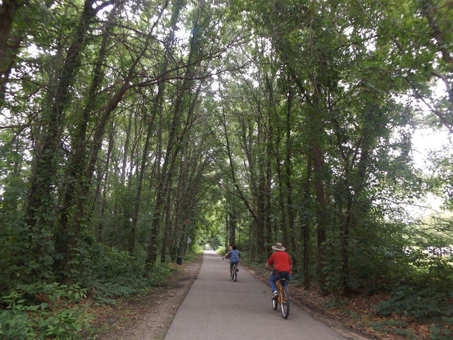 Bike Ride Bike Trail Tree Canopy  Nature Photography Nature_collection Naturelovers Nature On Your Doorstep Man In A Straw Hat Two Is Better Than One