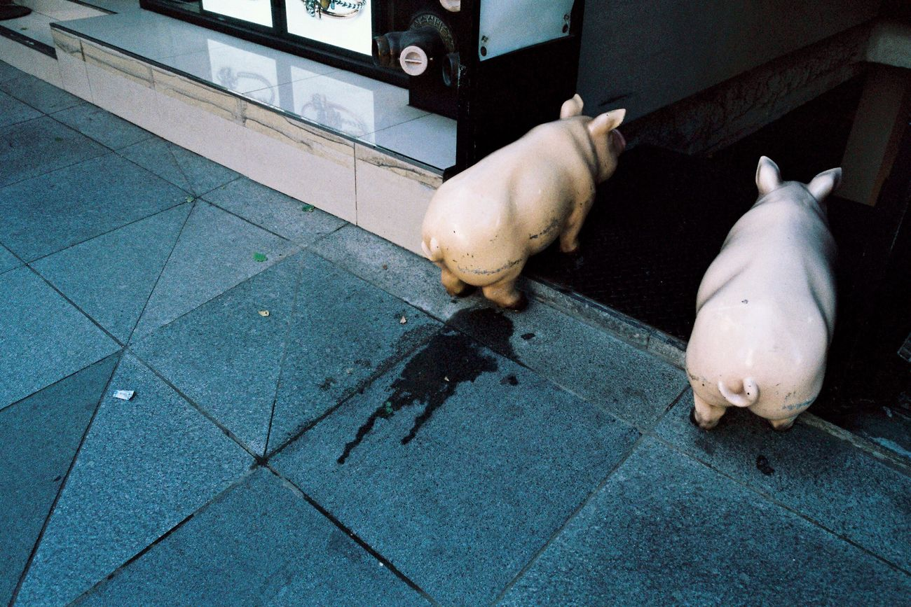 No People Street Photography Contaxt2 Filmcamera 35mm Film Filmisnotdead Film Photography Street Pig Animal Themes Pee Pissed
