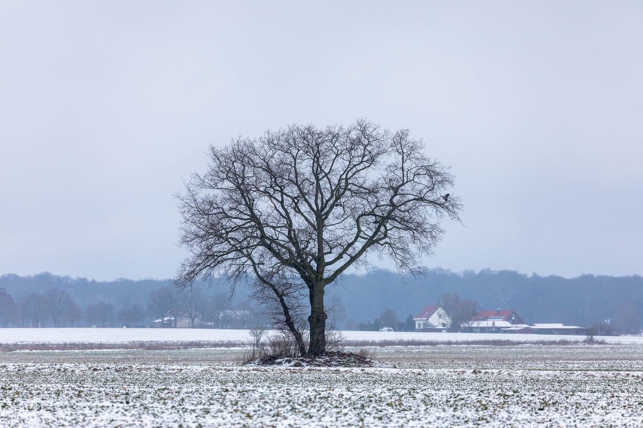 Bare Tree Beauty In Nature Cold Temperature Day Frozen Houses Nature No People Outdoors Overcast Rural Scene Single Tree Sky Snow Snowing Solitude Tree Village Winter