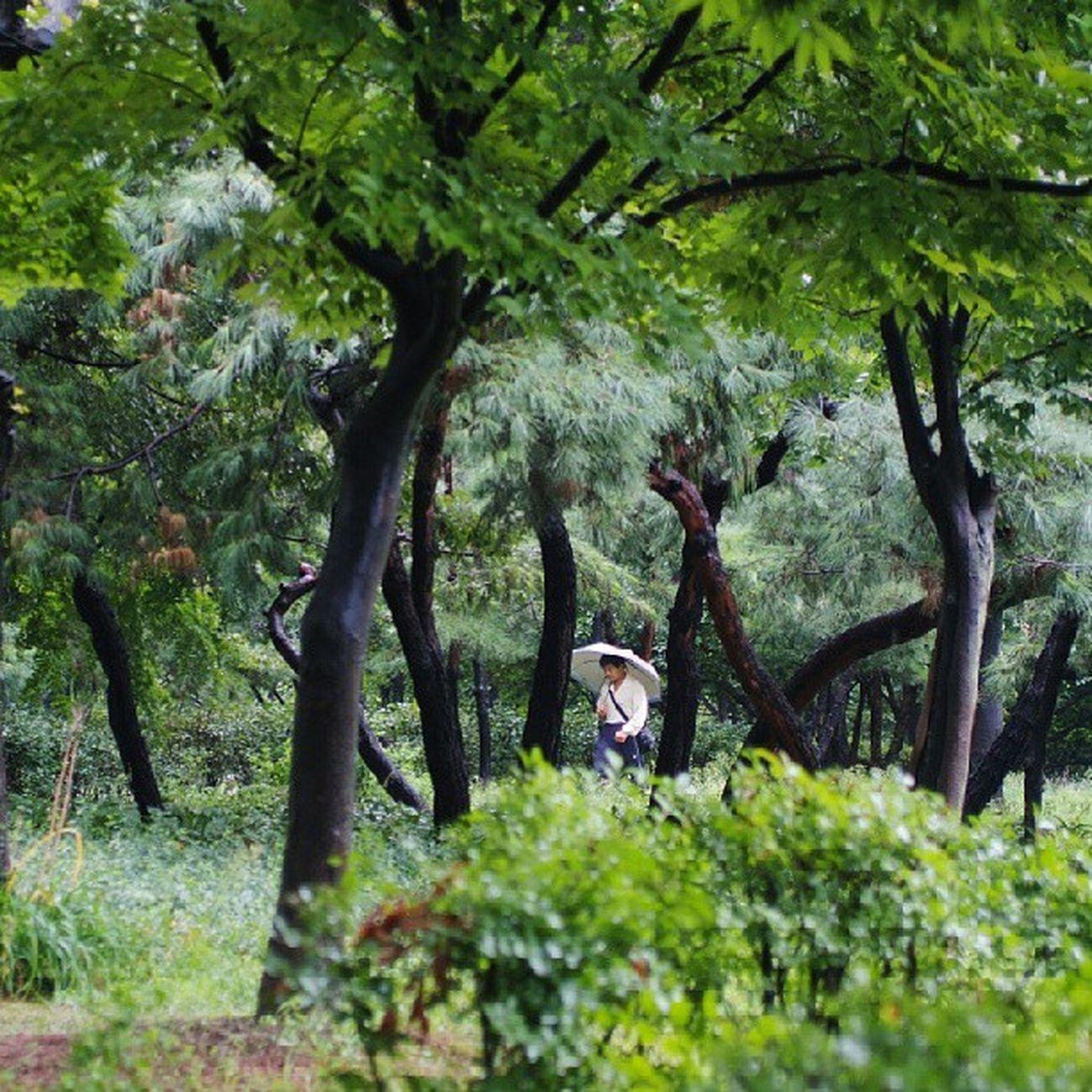 Robin_theme15 Walking in the rain 소녀같은 비가 어깨를 톡톡 가리봉동