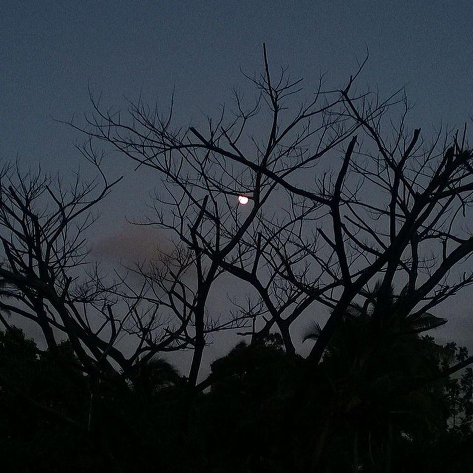 Sky_captures Silhouette Moon Weatindies_bnw Wu_caribbean World_union Grenada Ilivewhereyouvacation