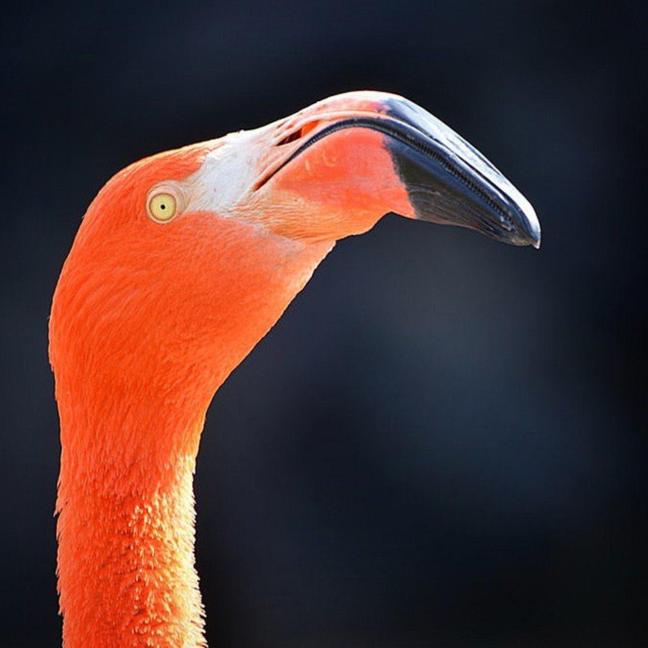 Flamenco Bioparque Temaiken Retrato Animal aves Argentina colorful colores portrait