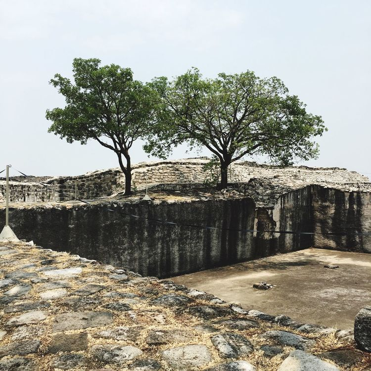 History Tree Old Ruin Ancient Architecture Built Structure Day Ancient Civilization No People Outdoors Nature Sky Xochicalco