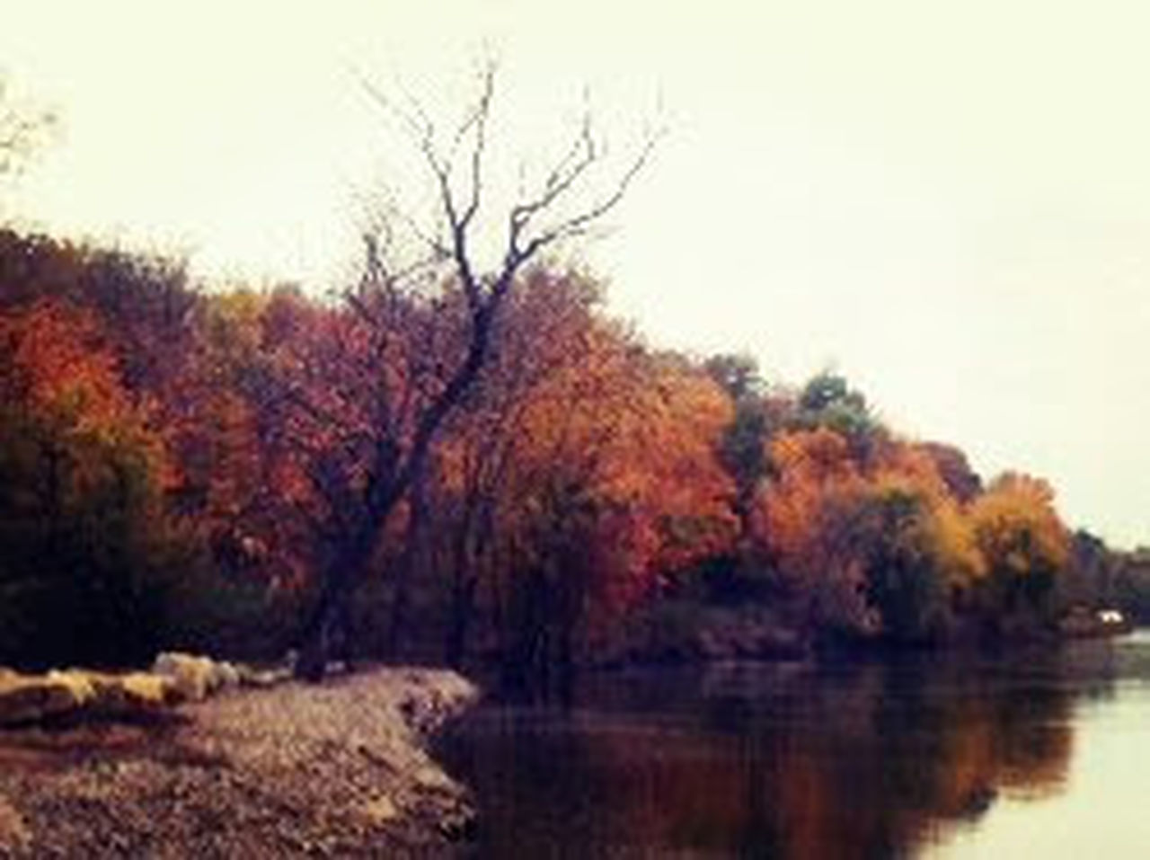 Outdoors Nature Red Tranquility Fall Fall Leaves Landscape Water