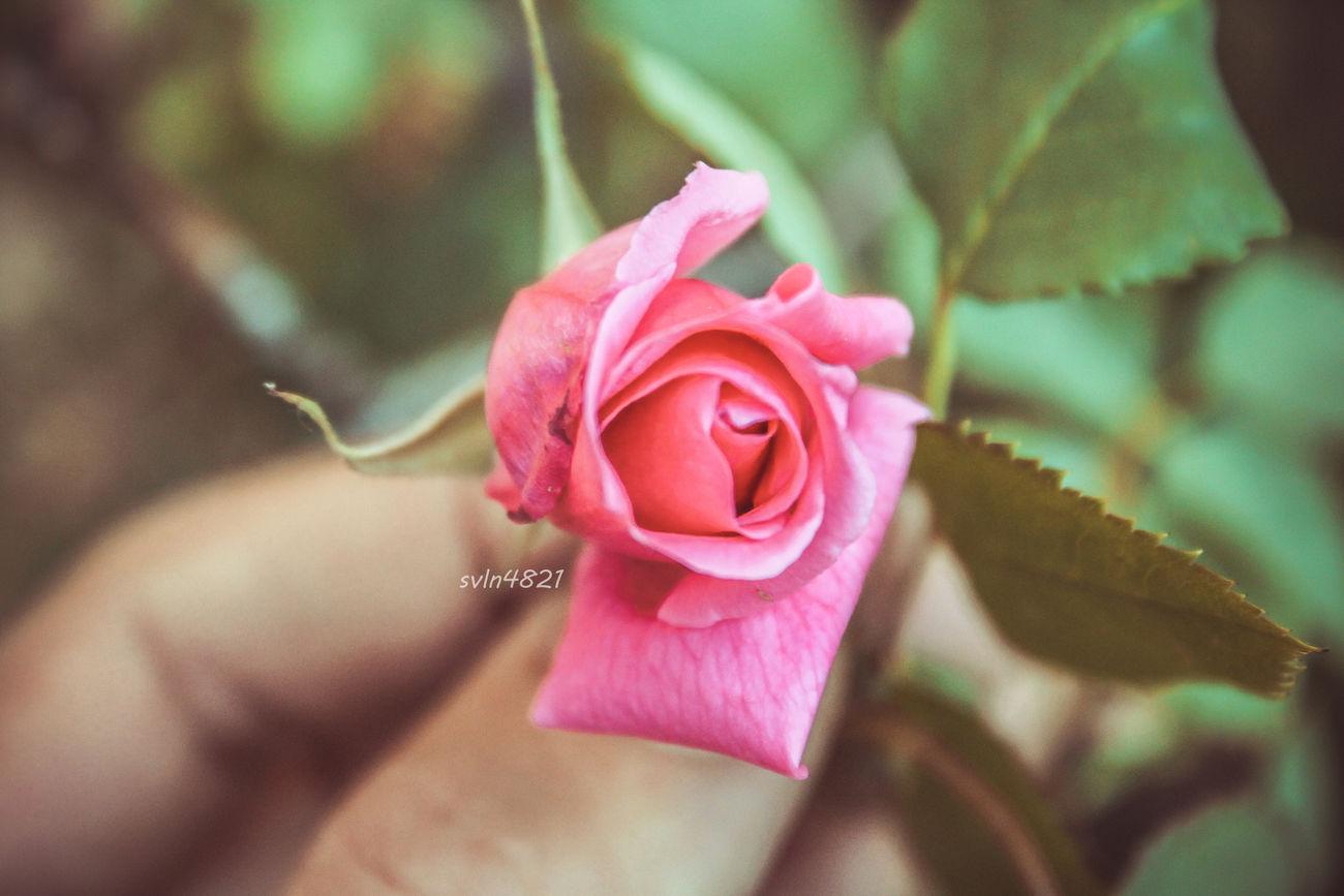 Svln4821 In My Hand Flower In Hand Azerbaycan