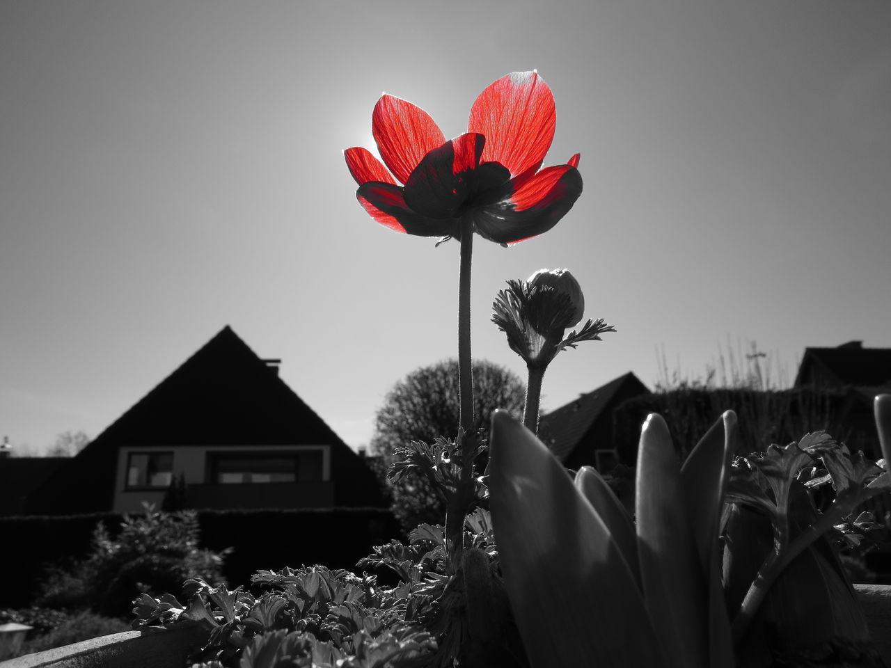 Flower Pantone Colors By GIZMON Garden