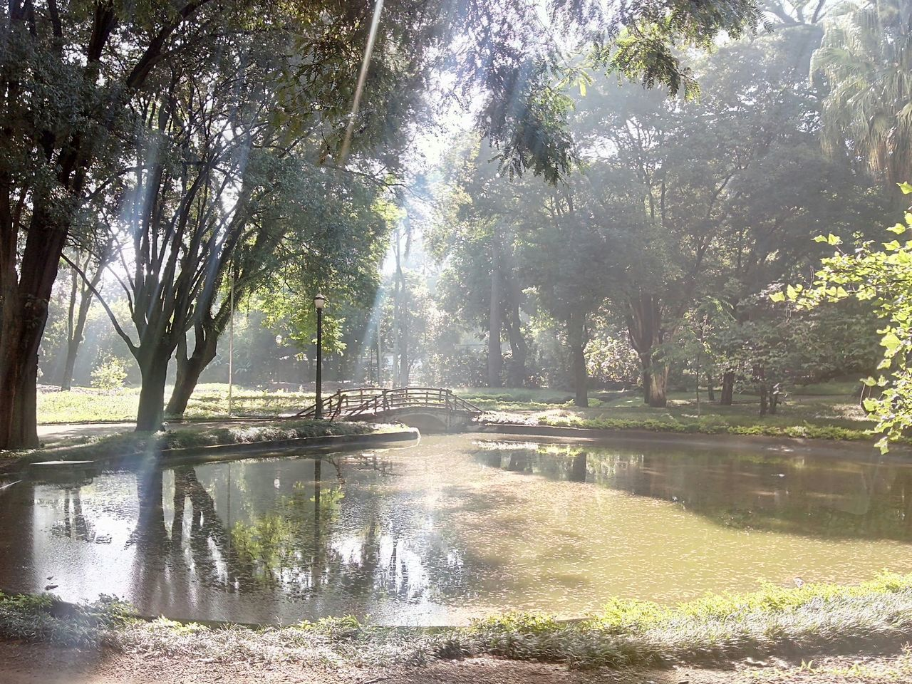No effects, just God...Nature_collection Enjoying Life Getting Inspired Mobgraphia Good Morning! Sao Paulo - Brazil Hugging A Tree Jardim Da Luz