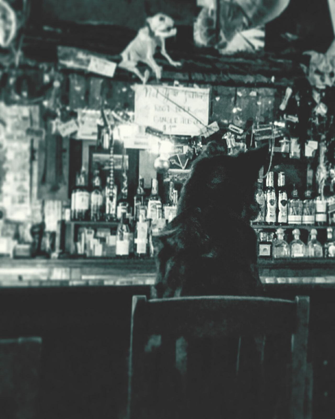 The Dog Who Ordered a Drink. Dog Bar City Edited Barscene Pet Pets Composition Interior Design