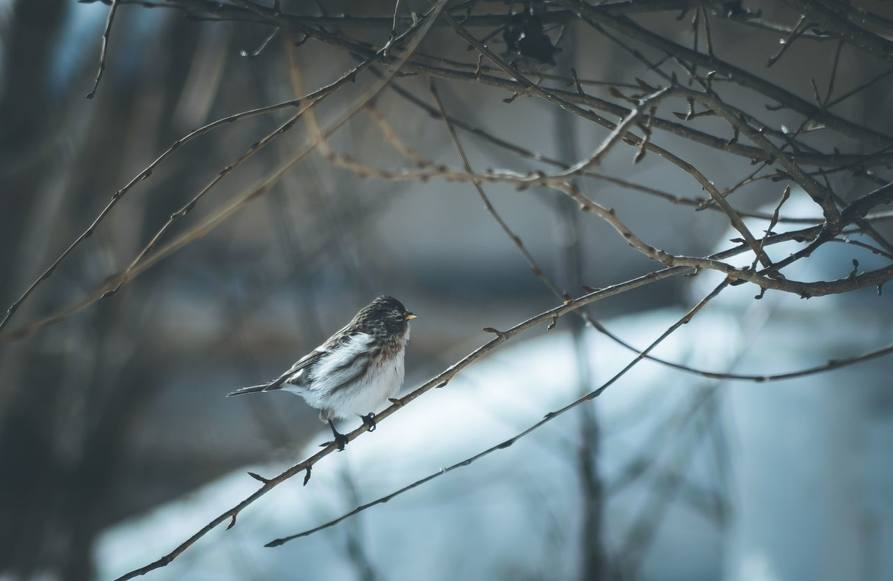 Bird In A Tree Bird Watching Birds Birds In Winter Birds Of EyeEm  Branch EyeEm Best Shots EyeEm Nature Lover Nature Nature On Your Doorstep Nature Photography Outdoors Perching Small Birds Snow Snowing Sparrow Sparrow In A Tree Sparrow On A Branch Sparrows Tree Winter Winter Winter Birds Wintertime