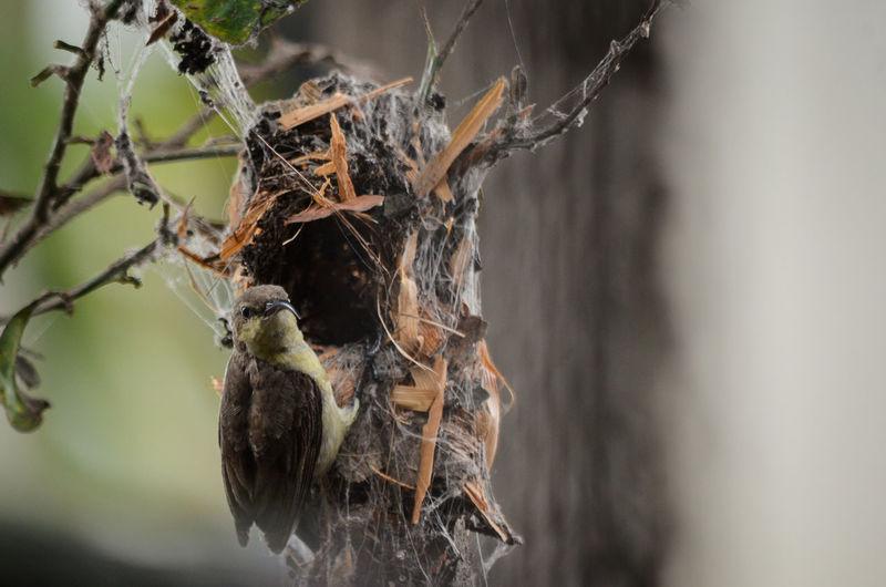 EyeEmNewHere Bird Photography EyeEm Gallery Nature EyeEm Nature Lover Birds🐦⛅