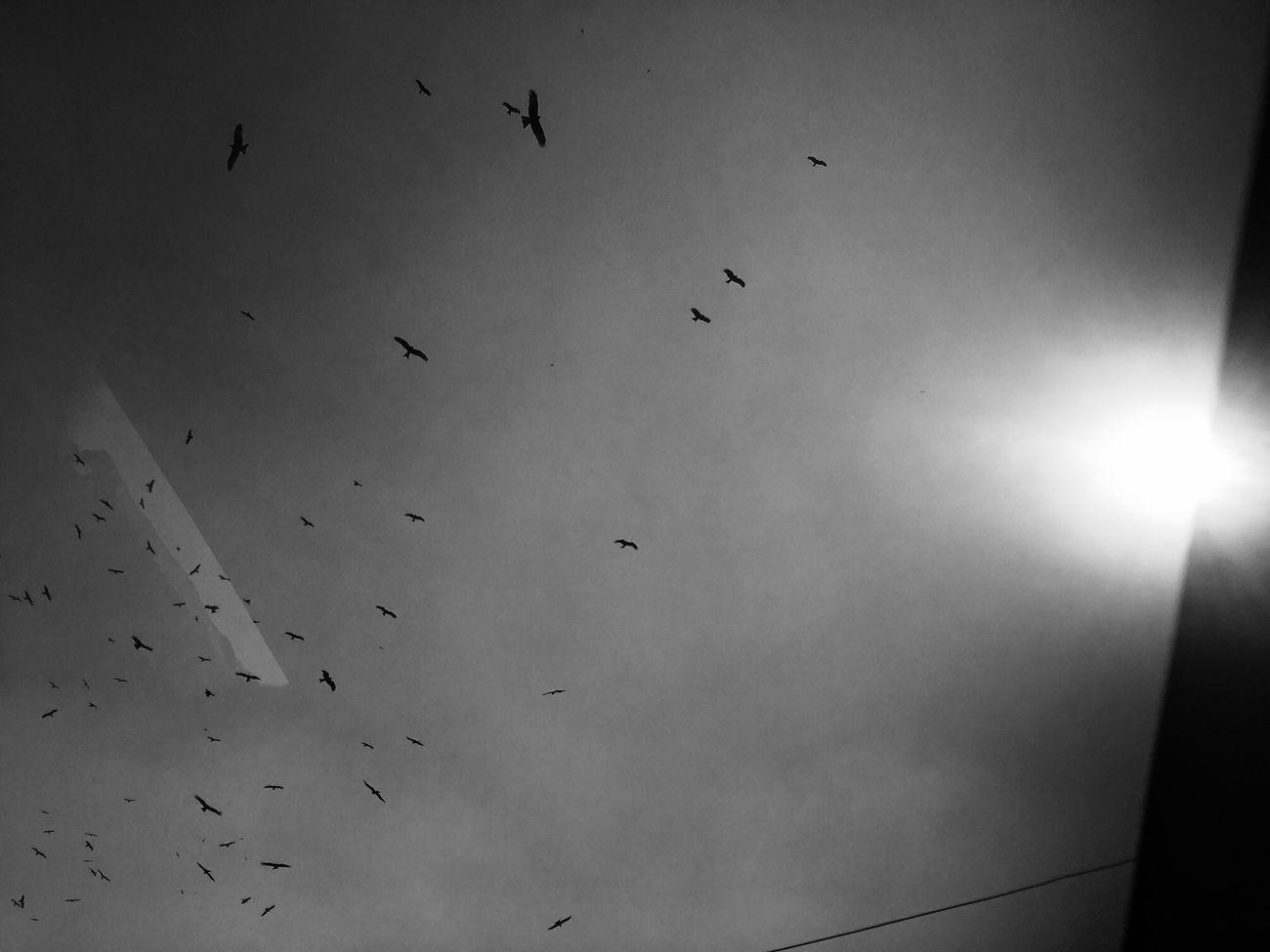 The City Light Birds City