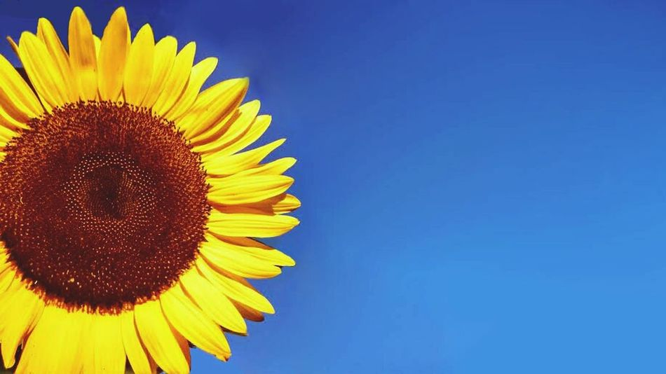 Sunflower Eye For Photography Colors EyeEm Nature Lover