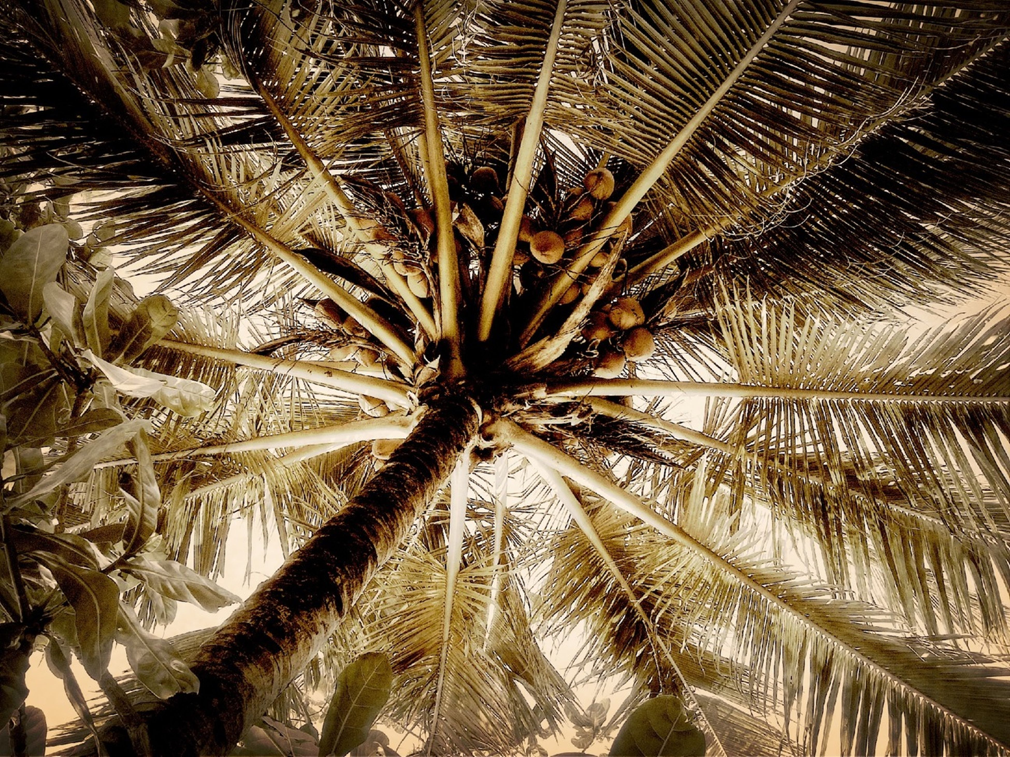 tree, low angle view, palm tree, branch, tree trunk, nature, growth, palm leaf, day, backgrounds, full frame, tranquility, outdoors, no people, beauty in nature, pattern, close-up, leaf, natural pattern, sky