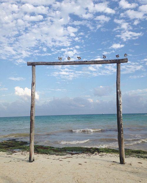 The view Playadelcarmen Beachphotography The Great Outdoors - 2017 EyeEm Awards The Architect - 2017 EyeEm Awards