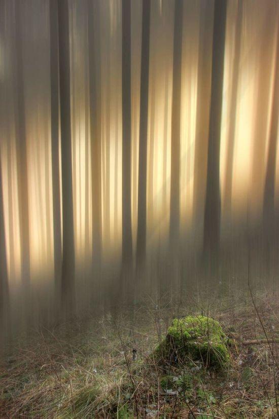 Harz Bilder Forest Grass Nature Tree Beauty In Nature Braunlage GERMANY🇩🇪DEUTSCHERLAND@