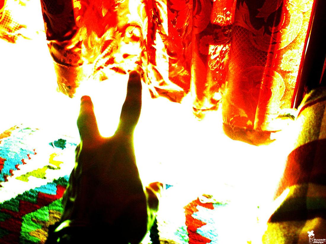 Morning Rituals First Eyeem Photo