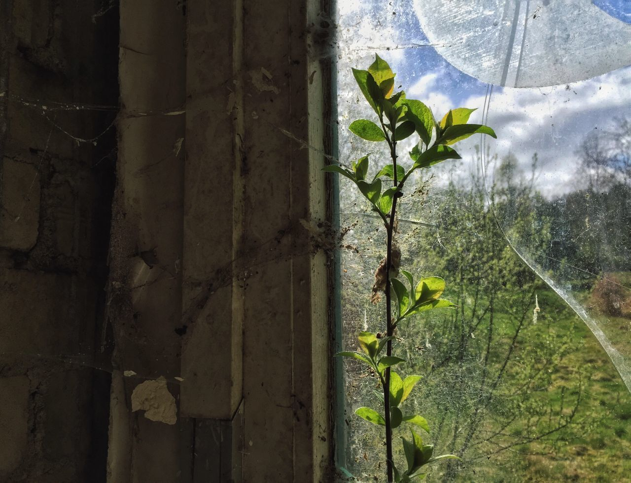 Nature Finds A Way Nature In The City Nature Fights Back Abandoned Abandoned Places Abandoned Buildings Empty Places Empty Empty Building Rotten Rotten Places Broken Glass Broken Window Plant Perspectives Showing Imperfection Decay Forgotten Places  Forgotten