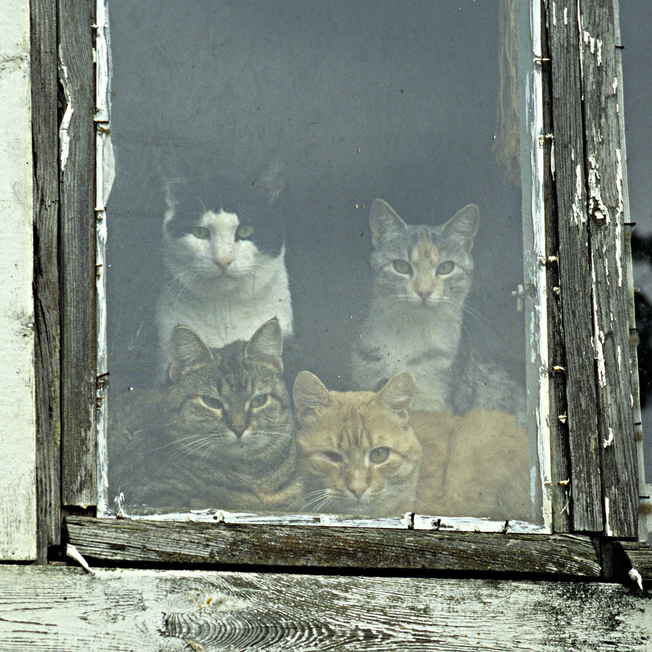 Animal Themes Cats Life Curiosity Day Domestic Animals Domestic Cat Four Cats In A Window No People Pets The Time Is Passing By Togetherness Who Is Coming?