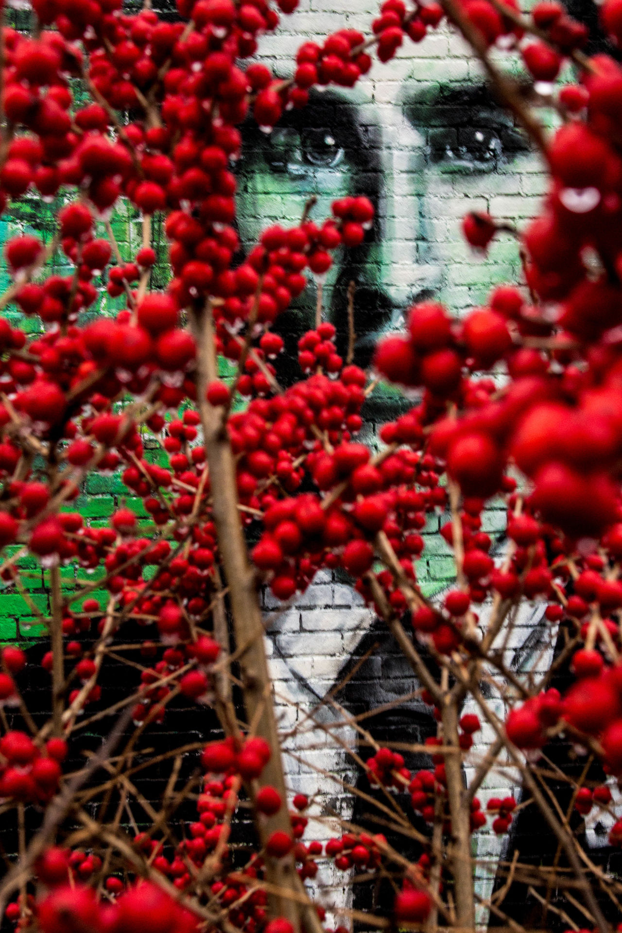 High Line, NYC Abundance Backgrounds Berry Fruit Day Full Frame Growth High Line Park Manhattan Mural Nature New York New York City No People Outdoors Red Rowanberry Urban