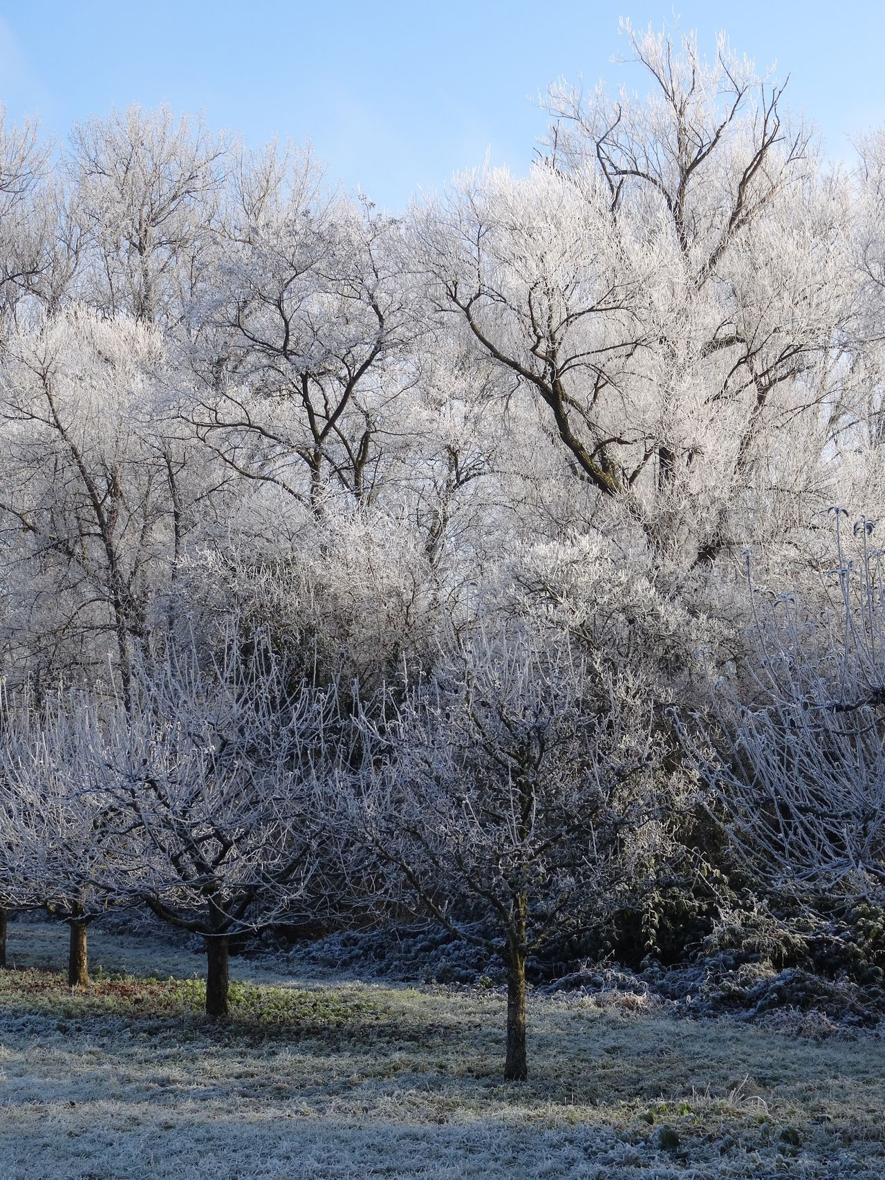 Tree Bare Tree Branch Nature Outdoors No People Tranquil Scene Tranquility Field Clear Sky Growth Beauty In Nature Day Sky Scenics Dried Plant Winter Wonderland White Frost Cold Temperature Snow Clear Sky Germany