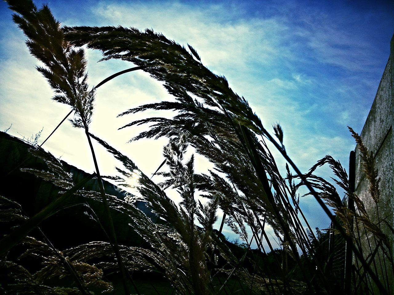low angle view, sky, growth, nature, outdoors, plant, no people, day, cloud - sky, beauty in nature, tree, tranquility, close-up