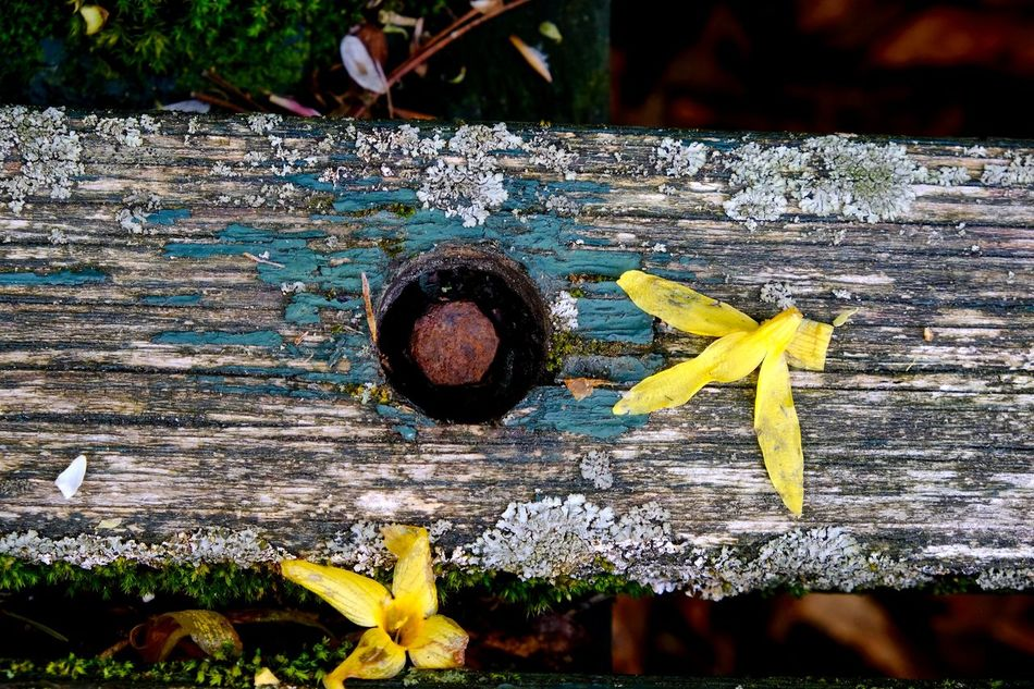 Beauty In Nature Close-up Flower Nature No People Outdoors Still Life Wood - Material Yellow