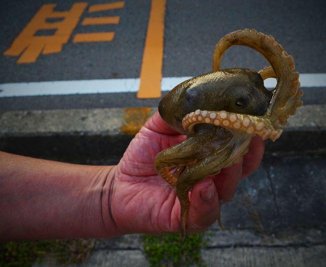 Hand Human Hand Ishizaki Japan Lunch Octopus Offering One Animal Streetscene Tako Tentacles Streetphotography Street Photography Urbanphotography Offerings Streetfood Streetfood Worldwide A Bird In The Hand