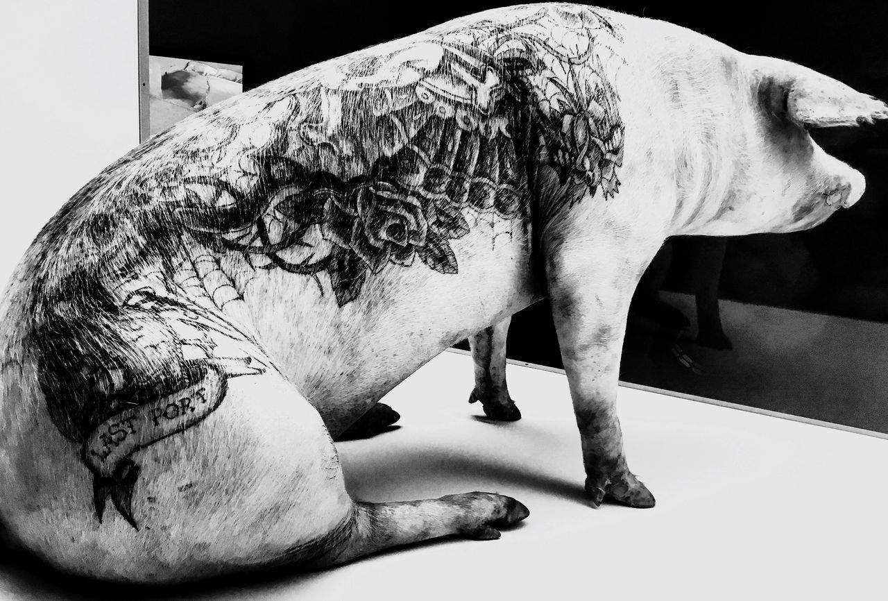 Tatoo Pig WimDelvoye Art Museum Mudam Side View Animal Themes