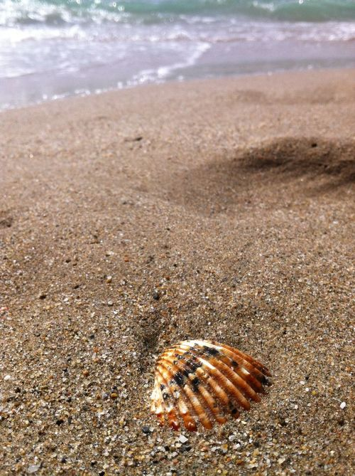 Shell On The Beach EyeEm Nature Lover Nature_collection