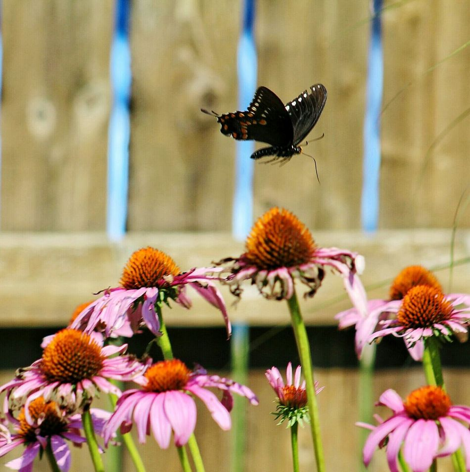 The simple things in life are so wonderful... Life's Simple Pleasures... Butterfly Fly Away..... From My Point Of View Beautiful Nature Butterfly Collection Flower & Butterfly Butterfly ❤ EyeEm Nature Lover Nature_collection Summer Memories...
