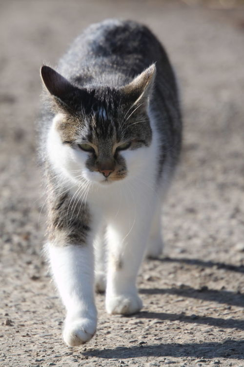 Cat Animal Themes Cat Close-up Domestic Animals Domestic Cat One Animal Outdoors Pets