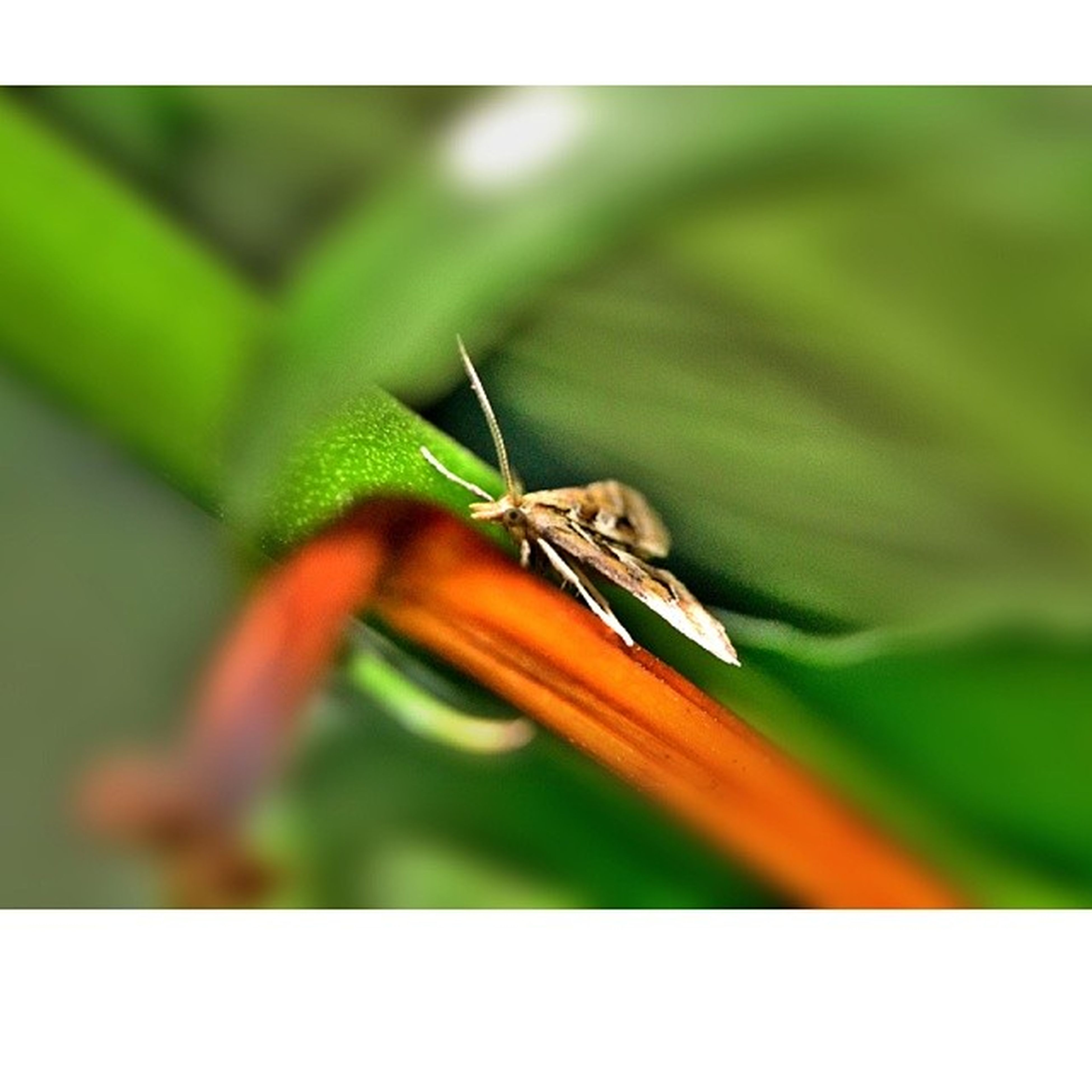 one animal, animal themes, animals in the wild, wildlife, insect, leaf, green color, close-up, focus on foreground, full length, nature, butterfly, perching, selective focus, zoology, transfer print, animal antenna, plant, auto post production filter, day