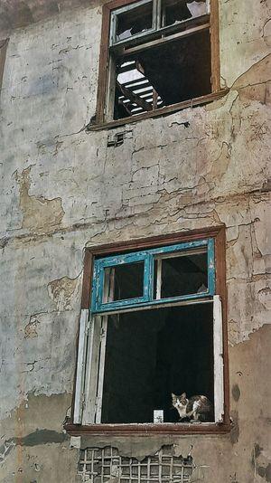 Заброшенные дома продолжают жить и заводят новых жильцов. Animals Cats Leave Home Live First Eyeem Photo