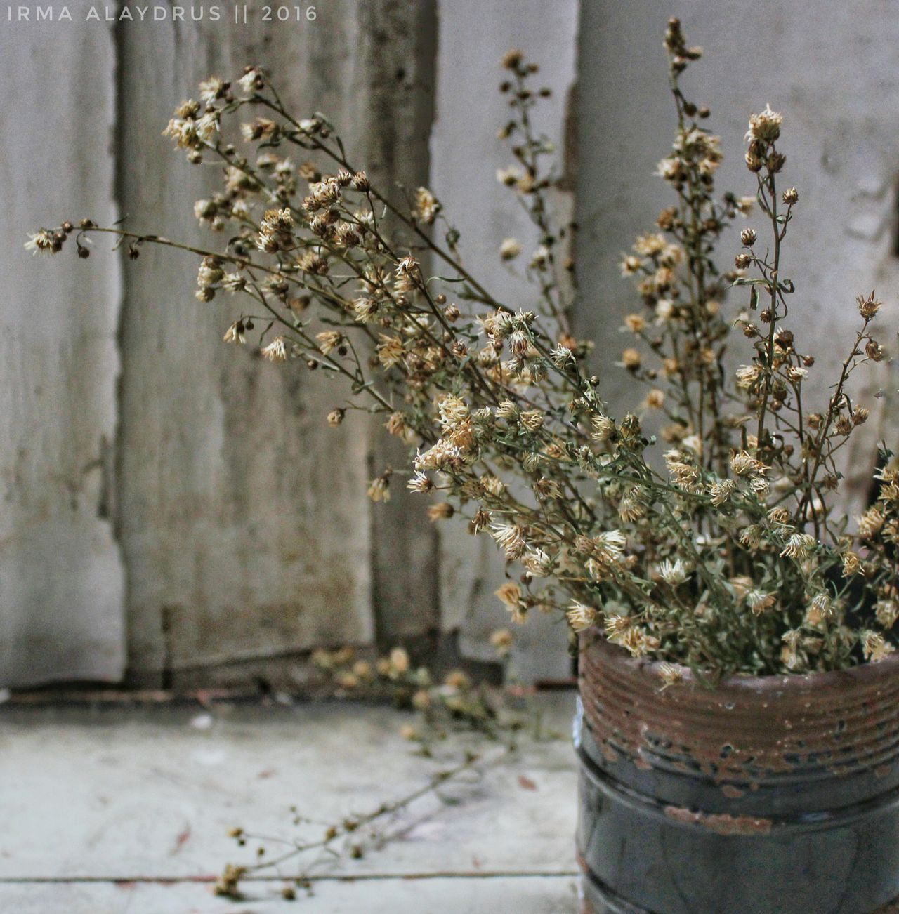 Dry and forgotten Tree Plant No People Nature Flower Close-up Dryleaves Dry Flower  Dry Leaves Foliage, Vegetation, Plants, Green, Leaves, Leafage, Undergrowth, Underbrush, Plant Life, Flora Still Life StillLifePhotography BestEyeemShots