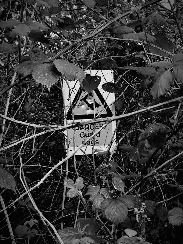 Sign Abandoned Keep Out! Warning Sign Beware Of The Dog Overgrown Overgrowth And Unmaintained Hidden Black & White Blackandwhite Photography No People Forgotten Places
