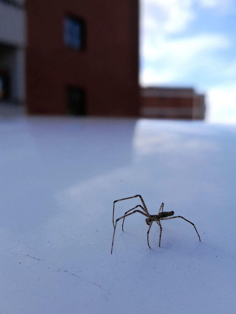 Spider HuaweiP9 Morning Light