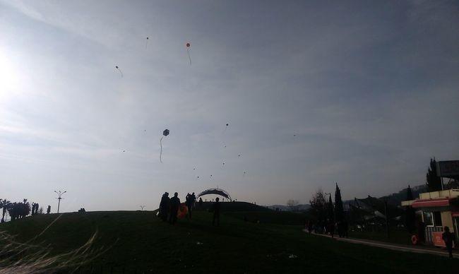 #Kite#freedom