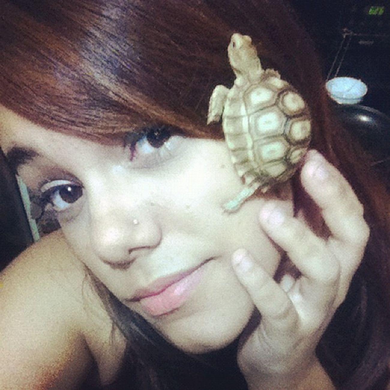 so cuteee <3 Tortus Tortoise Sulcata Baby mine